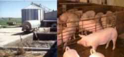 Presentación de planta piloto para la transformación de residuos porcinos en abono orgánico.