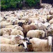 """BEQUES D'ASSISTÈNCIA pel Congrés Internacional """"Adapting Animal Production to Changes for a Growing Human Population"""" (Lleida, 19, 20 i 21 de Maig 2010)"""