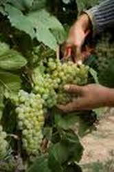 Viticultura a la carta