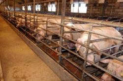 Ajuts a la millora de la gestió mediambiental de les explotacions porcines.