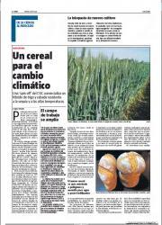 Un cereal para el cambio climático