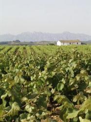 Impuls a la modernització i competitivització del sector vitivinícola
