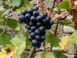 Ajuts a les inversions per a la millora de la producció i/o comercialització de productes vitivinícoles.