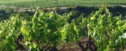 Ajuts dels plans de reestructuració i/o reconversió de la vinya