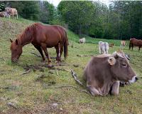 El Govern aprova el Decret d'ordenació d'explotacions ramaderes