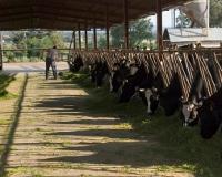 Avantprojecte de llei de la funció inspectora i de control, i del procediment i règim sancionador en matèria d'agricultura i ramaderia