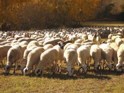 Reials decrets de l'aplicació de la PAC1420 a l'estat espanyol