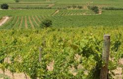 Ajuts a les inversions a les empreses del sector vitivinícola