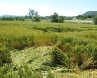 Nova Fitxa Tècnica sobre les pràctiques agrícoles pel pagament verd o 'greening'
