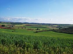 El Gobierno modifica algunos aspectos de la normativa para la aplicación en España de la Política Agrícola Común para la campaña 2017