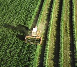 El Ministerio de Agricultura, Alimentación y Medio Ambiente publica en su página web los Estudios de Costes y Rentas de las Explotaciones Agrarias (ECREA)