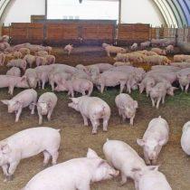 Jornada en línia. Reduir les  emissions en la producció porcina: Per on seguim?