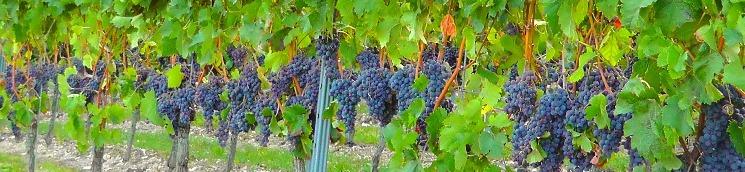 Ajuts a la mesura de promoció de productes vinícoles en els mercats de tercers països, campanya 2018-2019 (Convocatòria)