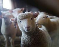 Convocatòria d'ajuts directes a l'agricultura i ramaderia per a la campanya 2018