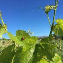 Jornada tècnica PATT: Estat de l'art de la vitivinicultura a Catalunya