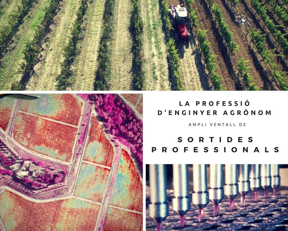 Els Enginyers Agrònoms,  fonamentals per al futur de l'alimentació