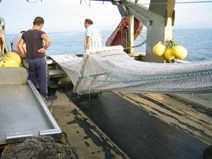 Convocats els ajuts del Fons Europeu Marítim i de la Pesca destinats al sector pesquer i aqüícola català, inclosa la comercialització i transformació i la política pesquera comú