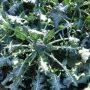 Jornada PATT: Dies del reg al Segarra-Garrigues. Teledetecció al regadiu i el cultiu del bròcoli