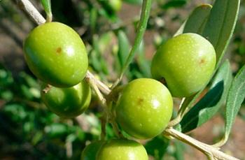 Convocats els ajuts al sector agrícola en matèria de sanitat vegetal