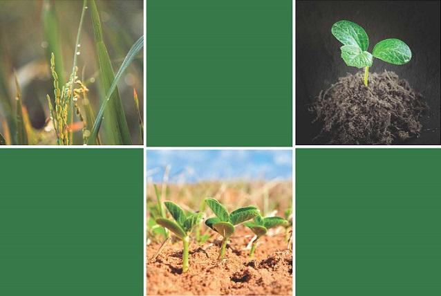"""Web  """"Plaguicides"""""""" i CAREX-CAT. Informe """"Exposició laboral a plaguicides d'ús fitosanitari""""."""