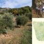 Jornada tècnica:Teledetecció i noves tecnologies en el cultiu de l'olivera (22a Fira de l'Oli DOP Siurana)