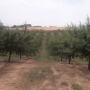Jornada: Dies del reg. L'olivera i l'ametller en regadiu al Segarra Garrigues