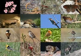 Publicades les convocatòries i bases reguladores de les  Subvencions de la Fundació Biodiversitat
