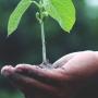 El projecte LIAISON està posant en marxa un concurs amb l'objectiu de buscar iniciatives innovadores i inspiradores de l'agricultura, la silvicultura i la cadena de subministrament agroalimentari.