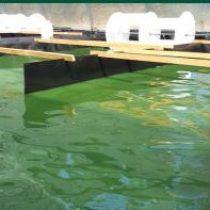 Jornada tècnica: l'aqüicultura de les algues i les seves aplicacions