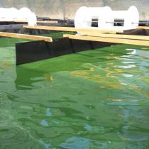 Jornada: L'aqüicultura de les algues i les seves aplicacions