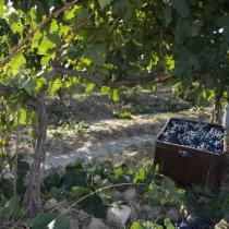 Jornada: Cooperació per a la Innovació Resultats dels Grups Operatius 2016 Sectors agroindustrial, hortícola, oleícola, vitivinícola i de l'arròs
