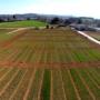 Jornada: RECOMEX. Resultats d'assaigs i innovacions en cultius extensius d'hivern