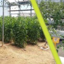 Jornada: Aspectes emergents en la recuperació de nutrients i de matèria orgànica, i el seu posterior ús en agricultura