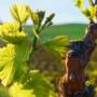 Jornada: Impuls de la bioenergia al sector vitivinícola