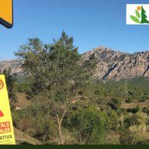 Curs de Direcció d'Obra Forestal i Ambiental