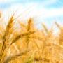 """Taller """"Cap a una agricultura neutra en carboni"""""""