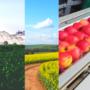 Assegurem el funcionament de la cadena agroalimentària