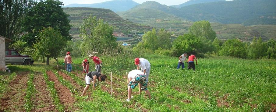 El Govern aprova la pròrroga de les mesures urgents per a la contractació temporal de treballadors en el sector agrari