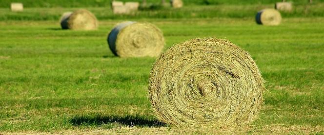 Nous terminis per a tràmits agrícoles relacionats amb l'Administració