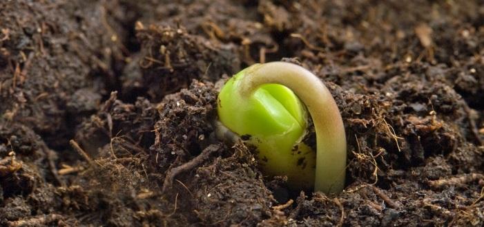 S'actualiza la normativa sobre producció, control i certificació oficial de plantes de viver i llavors