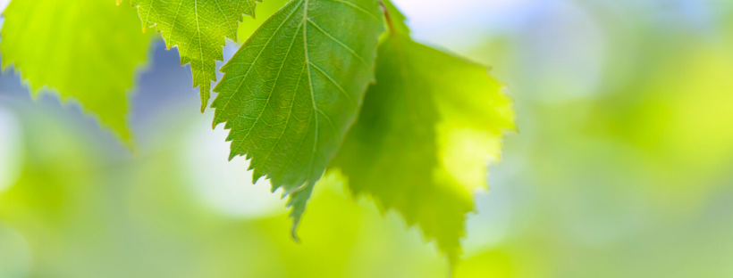 Creem un grup de treball d'enginyers agrònoms per a debatre sobre la Proposta de Llei de Creació de l'Agència de la Natura