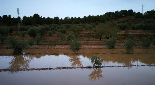 Convocatòria d'ajuts destinats a les explotacions agràries afectades pels aiguats d'octubre de 2019 o pel temporal glòria de gener de 2020