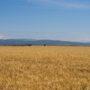 Agricultura defineix els criteris per promoure la implantació de plantes solars fotovoltaiques d'acord amb el valor agrari del sòl