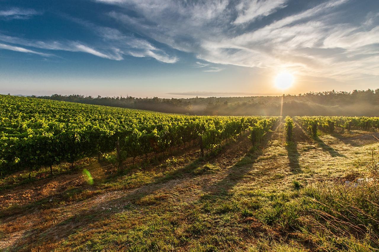 El Govern ha aprovat mesures extraordinàries per pal·liar els efectes de COVID-19 en el sector vitivinícola