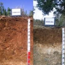 """Presentació del projecte """"Elaboració d'un plànol de varietats i sòls del conreu de l'avellaner a Catalunya"""""""