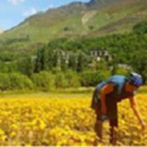 Jornada: Dia Internacional de les Dones Rurals