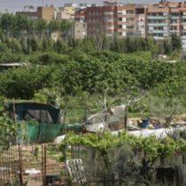 """Conferència en directe: """"L'agricultura en els espais metropolitans. El cas de la Regió Metropolitana de Barcelona"""""""