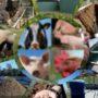 El Departament d'Agricultura publica una Guia de les tecnologies de tractament de les dejeccions ramaderes a Catalunya