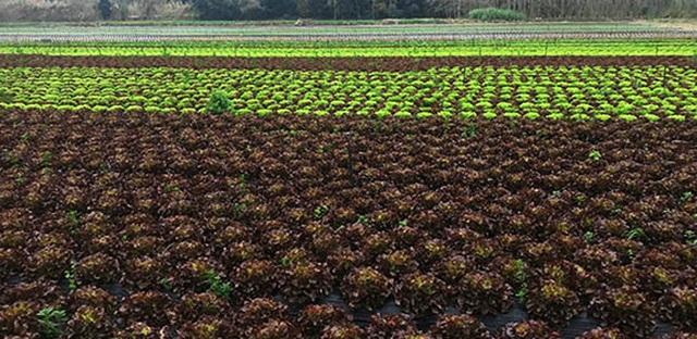 El nou Pla director de l'horta de Catalunya permetrà millorar la producció i la comercialització de productes de proximitat
