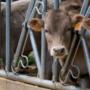 Els Enginyers Agrònoms participem en el Grup de treball agilització – procediments d'autorització de les activitats ramaderes